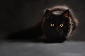 cat-silhouette-cats-silhouette-cat-s-eyes.jpg