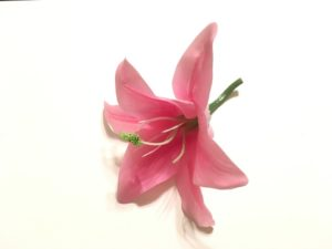 ピンク色のユリ